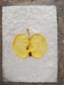appelschijf op nat handgeschept papier, voor fruitkaart appel