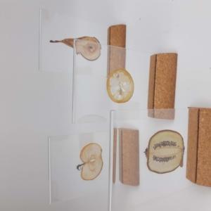 plexiglas lijstje met gedroogde groente- of fruitschijf (papyrus papier)